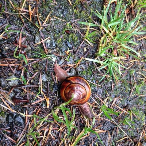 Snail Surprise