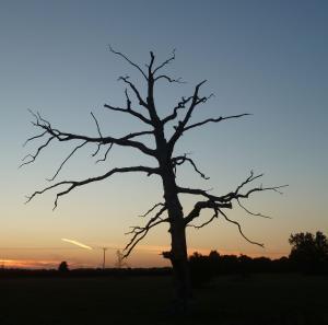 dead-tree-sunset