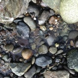 Tide pools by the ferry dock